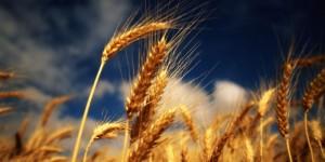 Cum arată primele prognoze ale anului agricol 2015
