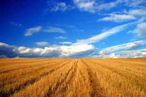 Terenurile arabile din vestul țării se apropie de 10.000 de euro hectarul