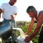 producatori-lapte
