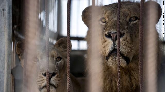 galerie-foto-animalele-de-la-gradina-zoologica-din-gaza