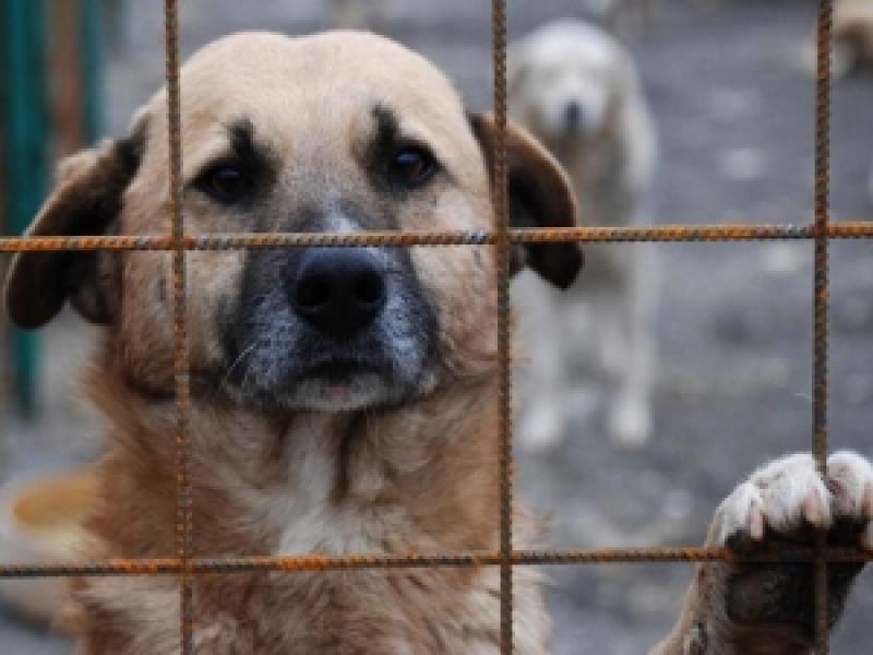 Poliţia animalelor s-a înfiinţat. Cine omoară un animal face închisoare