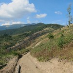 103 150x150 GALERIE FOTO Imagini apocaliptice din Făgăraş. Cel mai înalt lanţ muntos din România a căzut pradă tăietorilor de lemne