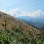 1110 150x150 GALERIE FOTO Imagini apocaliptice din Făgăraş. Cel mai înalt lanţ muntos din România a căzut pradă tăietorilor de lemne