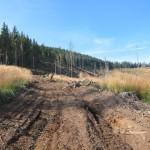 128 150x150 GALERIE FOTO Imagini apocaliptice din Făgăraş. Cel mai înalt lanţ muntos din România a căzut pradă tăietorilor de lemne