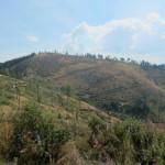 129 150x150 GALERIE FOTO Imagini apocaliptice din Făgăraş. Cel mai înalt lanţ muntos din România a căzut pradă tăietorilor de lemne