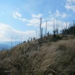 133 150x150 GALERIE FOTO Imagini apocaliptice din Făgăraş. Cel mai înalt lanţ muntos din România a căzut pradă tăietorilor de lemne