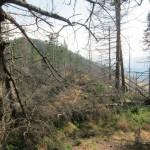 143 150x150 GALERIE FOTO Imagini apocaliptice din Făgăraş. Cel mai înalt lanţ muntos din România a căzut pradă tăietorilor de lemne