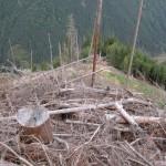 171 150x150 GALERIE FOTO Imagini apocaliptice din Făgăraş. Cel mai înalt lanţ muntos din România a căzut pradă tăietorilor de lemne