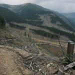181 150x150 GALERIE FOTO Imagini apocaliptice din Făgăraş. Cel mai înalt lanţ muntos din România a căzut pradă tăietorilor de lemne