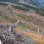 193 150x150 GALERIE FOTO Imagini apocaliptice din Făgăraş. Cel mai înalt lanţ muntos din România a căzut pradă tăietorilor de lemne