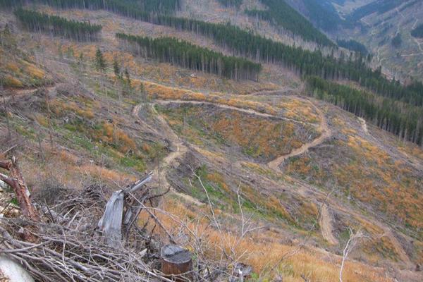 GALERIE FOTO Imagini apocaliptice din Făgăraş. Cel mai înalt lanţ muntos din România a căzut pradă tăietorilor de lemne