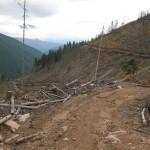 20 150x150 GALERIE FOTO Imagini apocaliptice din Făgăraş. Cel mai înalt lanţ muntos din România a căzut pradă tăietorilor de lemne