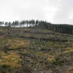 211 150x150 GALERIE FOTO Imagini apocaliptice din Făgăraş. Cel mai înalt lanţ muntos din România a căzut pradă tăietorilor de lemne