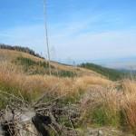 212 150x150 GALERIE FOTO Imagini apocaliptice din Făgăraş. Cel mai înalt lanţ muntos din România a căzut pradă tăietorilor de lemne
