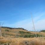 312 150x150 GALERIE FOTO Imagini apocaliptice din Făgăraş. Cel mai înalt lanţ muntos din România a căzut pradă tăietorilor de lemne