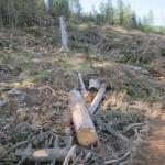 412 150x150 GALERIE FOTO Imagini apocaliptice din Făgăraş. Cel mai înalt lanţ muntos din România a căzut pradă tăietorilor de lemne