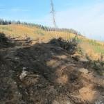 510 150x150 GALERIE FOTO Imagini apocaliptice din Făgăraş. Cel mai înalt lanţ muntos din România a căzut pradă tăietorilor de lemne