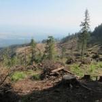76 150x150 GALERIE FOTO Imagini apocaliptice din Făgăraş. Cel mai înalt lanţ muntos din România a căzut pradă tăietorilor de lemne