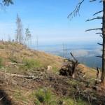 85 150x150 GALERIE FOTO Imagini apocaliptice din Făgăraş. Cel mai înalt lanţ muntos din România a căzut pradă tăietorilor de lemne