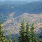 96 150x150 GALERIE FOTO Imagini apocaliptice din Făgăraş. Cel mai înalt lanţ muntos din România a căzut pradă tăietorilor de lemne