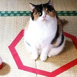 Pisica ta e în continuă mişcare Fă-o să stea locului! GALERIE FOTO