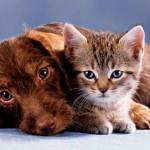 Cum beau apă câinii şi pisicile. De azi nu mai e un mister