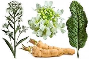 Pastila de sănătate. Rădăcina de ȘTEVIE, un MIRACOL pentru piele, oase și limfă