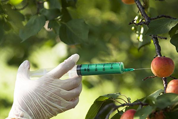Alimentele procesate sau modificate genetic provoacă leziuni la nivelul ADN-ului. Iarna Foametei, studiu de referinţă pentru nutriţionişti