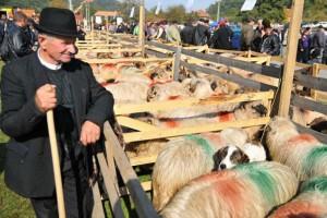 Un deputat cere măsuri de protejare a fermierilor români